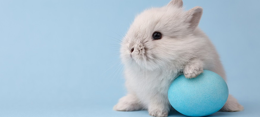 Top 7 things to do over the Easter weekend