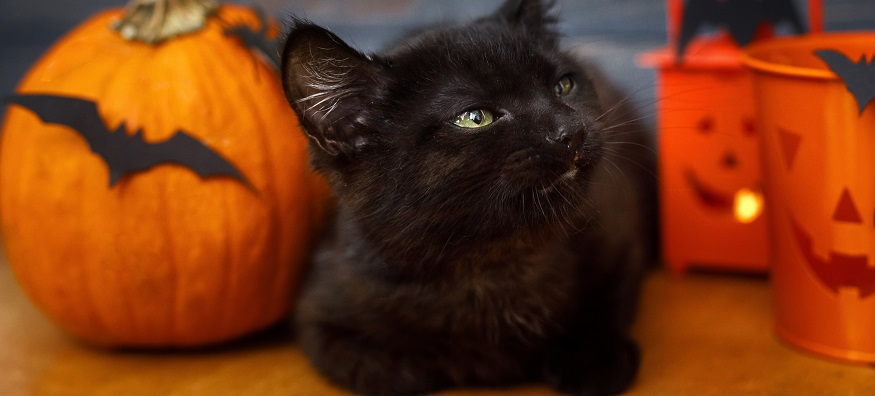 black cat sat next to pumpkin
